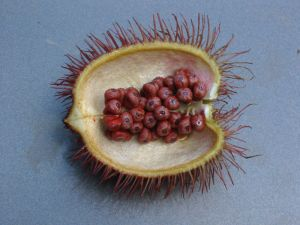 annatto in its natural state