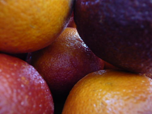 blood oranges up close and personal