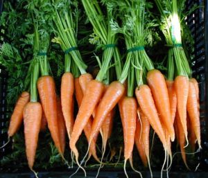carrots from Mariquita farm my CSA (photo from mariquita.com)
